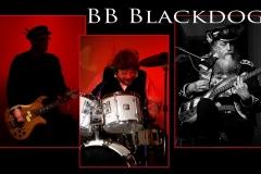 Blackdog8